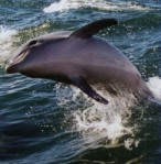 dolphinsmile3